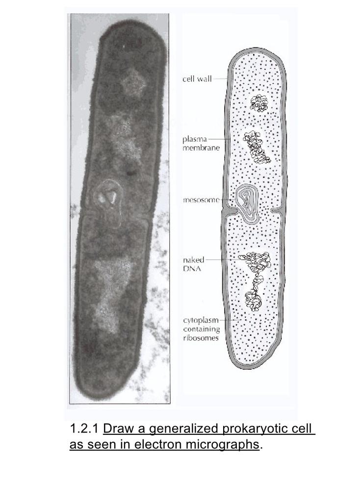 ib-biology-draw-assessment-statements by PakLiam via Slideshare
