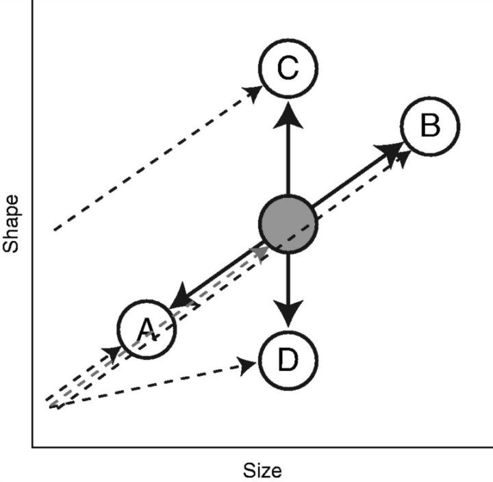 Evolution of flower development during an adaptive radiation in Caiophora