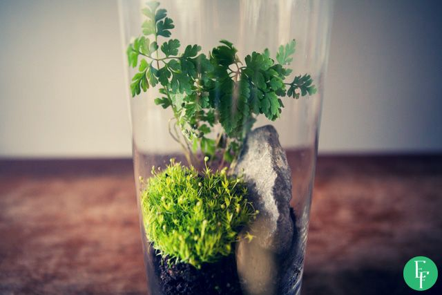 esik floresik: Forest in a Jar - Las w słoiku  It's amazing how simple this DIY project is! #forestinajar #ecofriendly #jargarden #giftidea #jar #garden #DIY #project