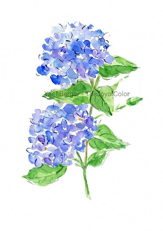 Hydrangea Watercolor Hydrangea Painting Blue Hydrangea Flower Painting Hydrangea Blosso Watercolor Flowers Paintings Watercolor Flowers Hydrangea Painting