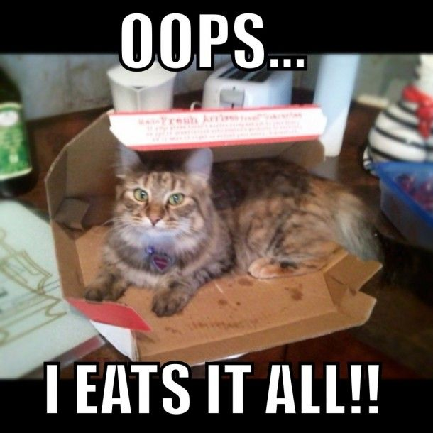 Best Lol Cats Images On Pinterest Cat Lovers Confined Space - 20 hilarious cat photos captioned comedians