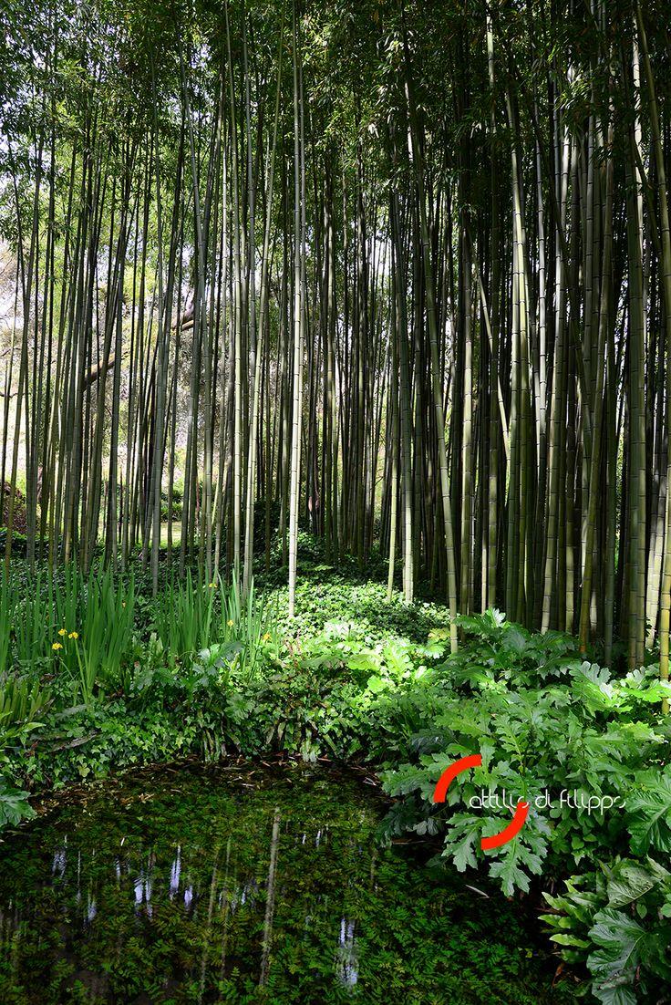 Foresta di bambu nel giardino di Ninfa