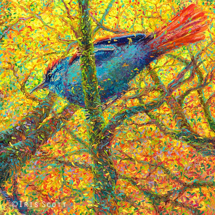 Yellow Blue Bird | 36x36in  Original SOLD |  Buy Prints