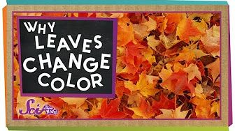 Why Do Leaves Change Color in Fall? - YouTube