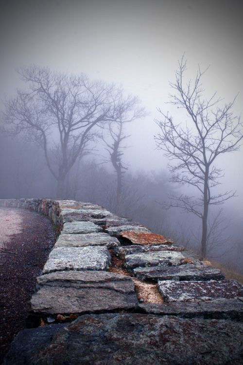 fog: Photos, Mists, Stones Wall, Living Life, Stones Paths, Trees, Into The Wood, Roads, Photography