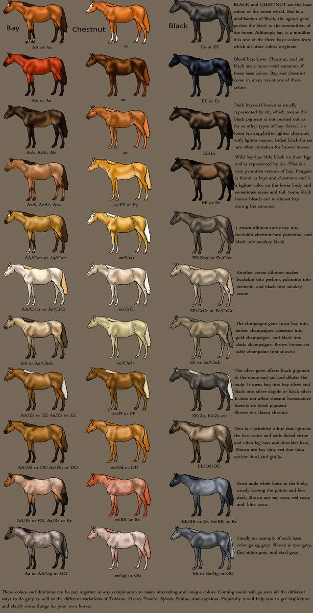 special breed s of horses | horse Color Chart by ~MagicWindsStables on deviantART