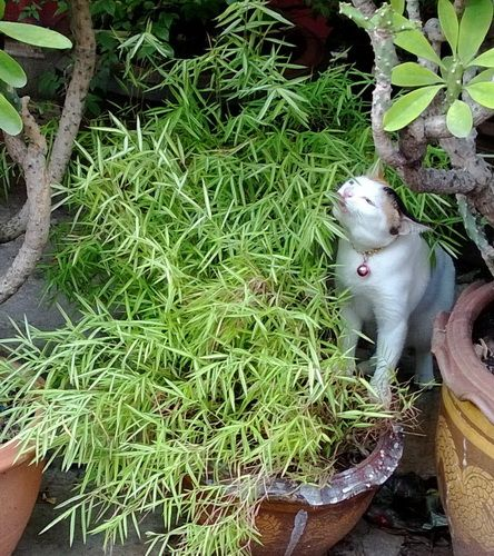 Plants safe for cats pinterest plants for Areca palm safe for cats