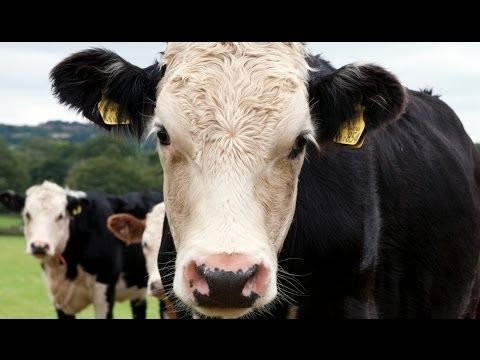 Environmental impact, rising meat prices, increasing disease and civil unrest: the effects of a food system not fit to satisfy the growing global appetite for meat.  Meat matters | Royal Society Summer Science Exhibition 2015  http://sse.royalsociety.org/2015/meat-matters/
