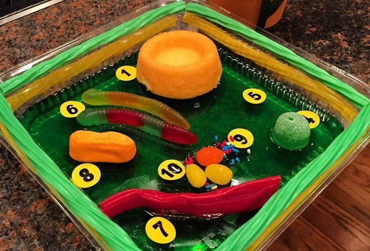 how to make plant cell model on thermocol