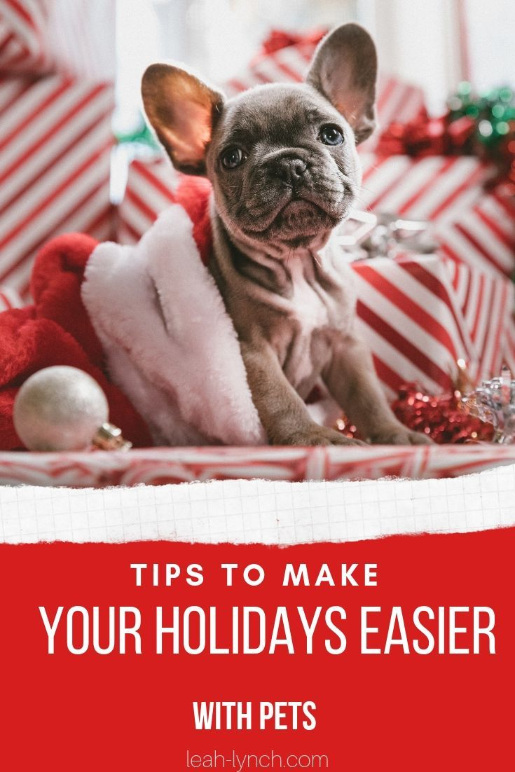 Tips To Make Your Holidays Easier With Pets Dog Presents Dog Gifts Christmas On A Budget
