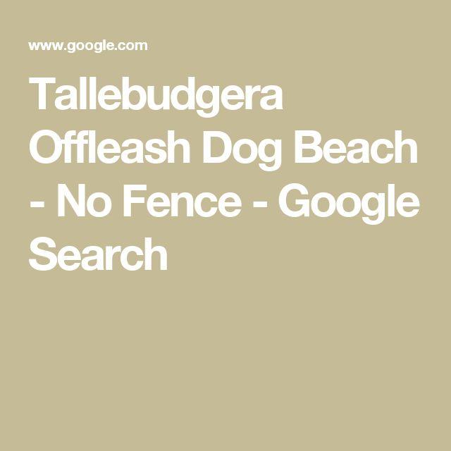 Tallebudgera Beach Dog Friendly