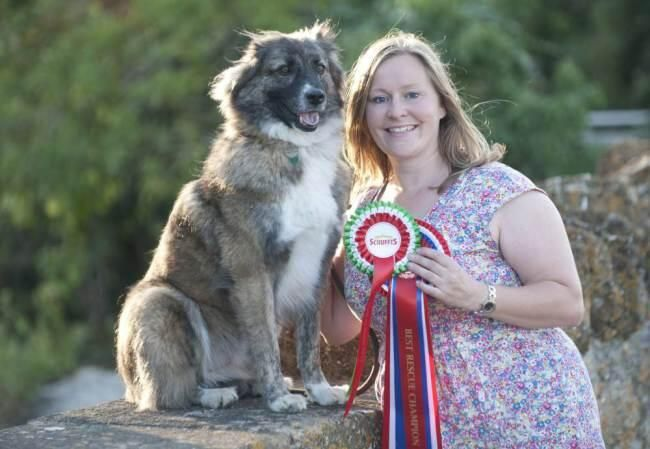 DOLLY HERO Dog abused in war-torn Afghanistan is in line to win Kennel Club award. Meet Wylie! ❤ Dolly