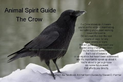 Crow passes through time, from past to future, as he will, and brings messages. Some traditions say it is from the Deity, some say from loved ones who have passed on. 386771_516549158377726_1544718453_n.jpg 480×319 pixels
