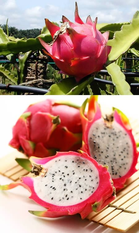 Exotic Fruits - Dragon Fruit exotic-fruits