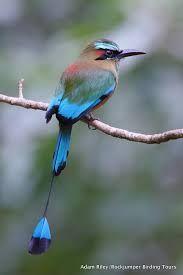 Resultado de imagen para nido de pajaro toh