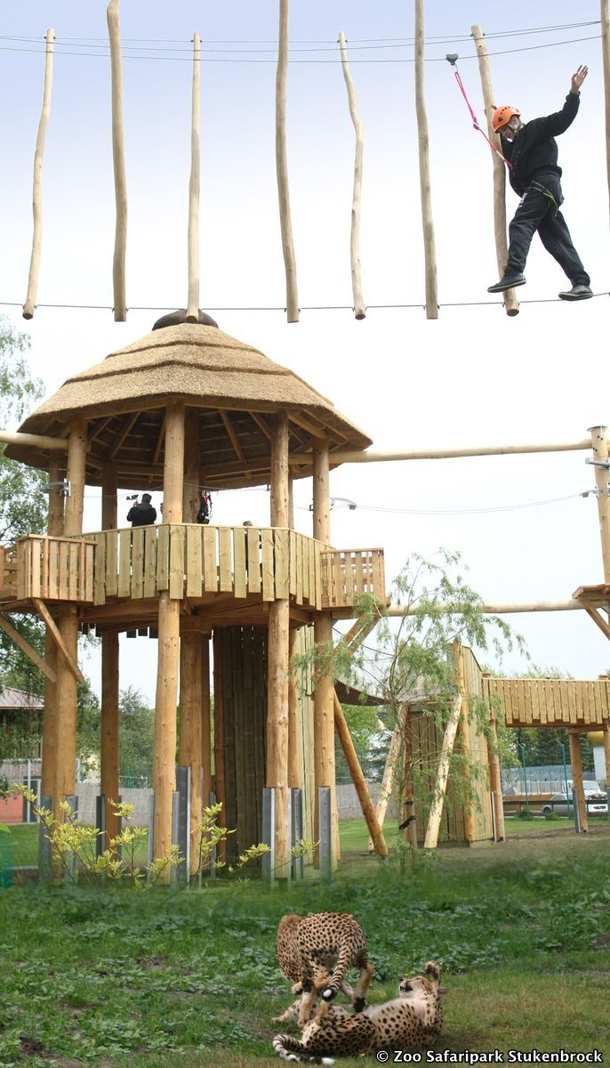 Climbing always comes with a certain adrenaline kick but that is seldom as high as at the Zoo Safaripark Stukenbrock. Here you have to manage climbing above feline and other wild animals.