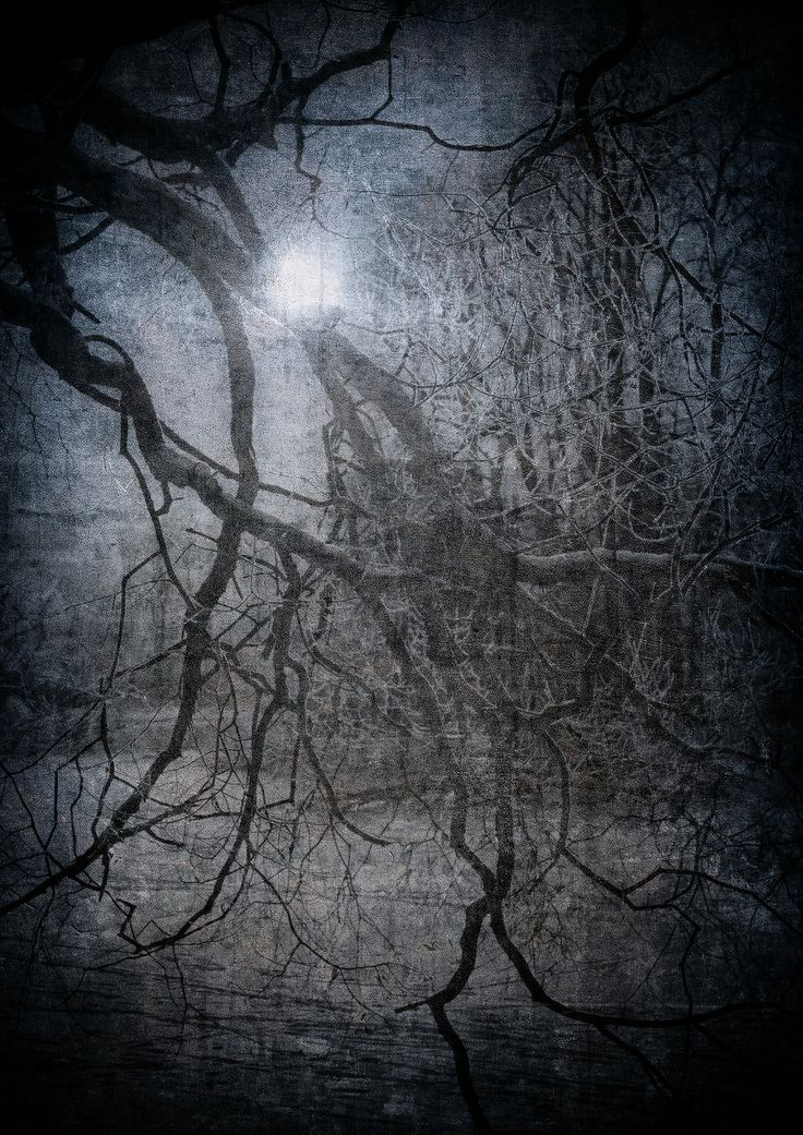 But as we moved into the trees, I realized that navigating the thick woods would be complicated by the lack of a path, and a lack of adequate light. The moon overhead was a crescent, and what little illumination it provided was lost in the tops of the trees, never really reaching the forest floor.