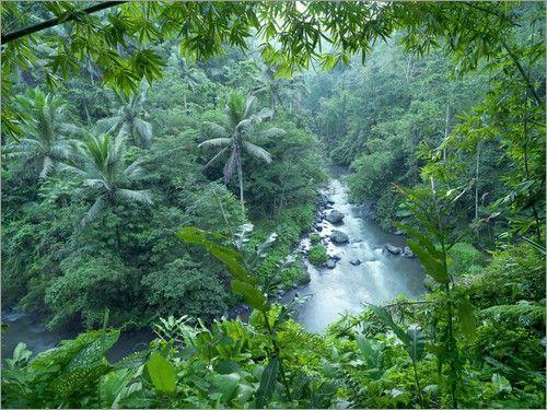 """Bild von xPACIFICA - """"tropischer Dschungel"""""""