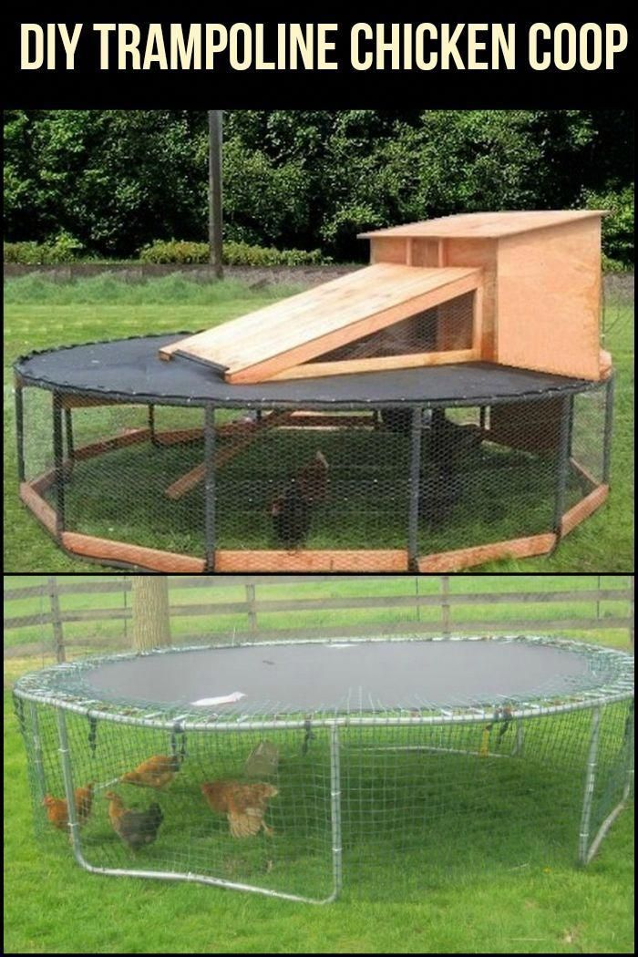 Are You Looking For An Easy To Make Chicken Coop Make Use Of A Trampoline Chickencoopplans Huhner Huhnerstall Huhner Im Garten