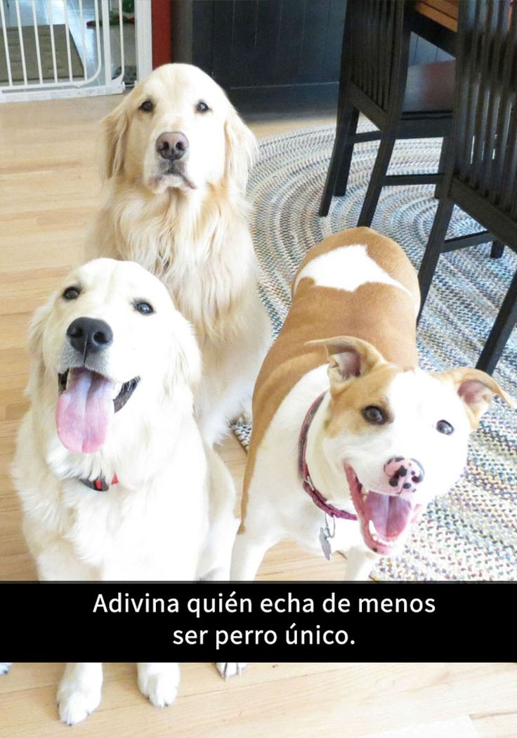 15 Divertidos snapchats con perros con los que es imposible no reírse. ¡ATENCIÓN al 11!