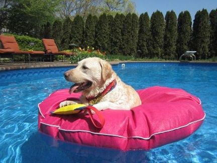 Tear-resistant dog pool float to let your pet cool off on hot summer days