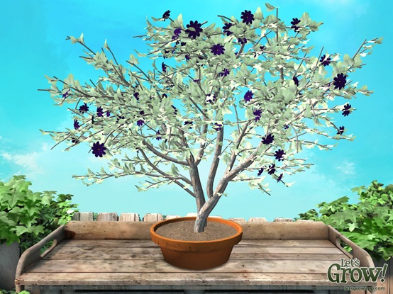 'Witherwood' - virtual plant created using the 'Let's Grow!' app for iPad. Love the almost white leaves and purple flowers. :-)   More info at www.letsgrowapp.com                 #plant #iPad #growth #letsgrow