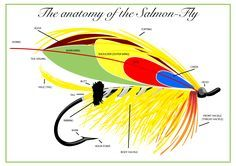 The anatomy of the salmon fly - a naming of parts. Go to http://www.ifish4life.com/the-anatomy-of-the-classic-salmon-fly.html for a full description.