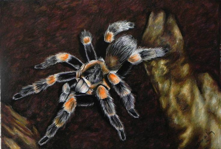 Spider 2 - Pastel on Paper Artist: Ellenor Hastie