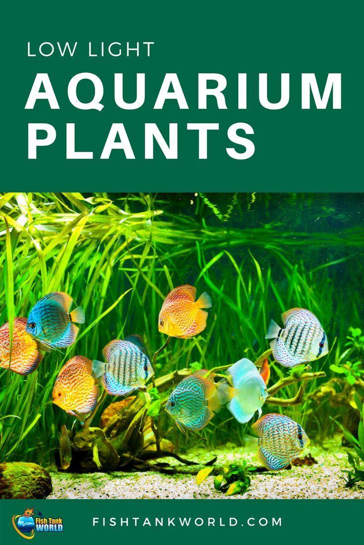 14 Easy Low Light Aquarium Plants For Beginners Fish Tank World Planted Aquarium Fish Tank Plants Fish Tank