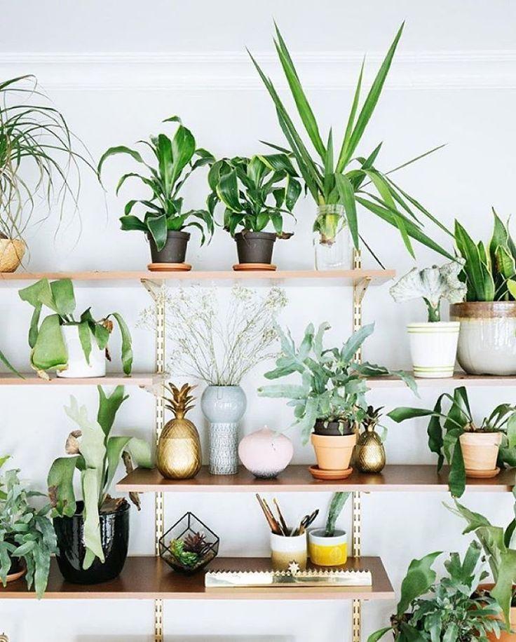 the ultimate plant shelfie botanicals pinterest plantes id es ikea et soir e pyjama. Black Bedroom Furniture Sets. Home Design Ideas