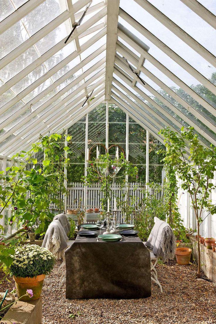 I växthuset trivs aprikoser, gurka och passionsblomma långt in på hösten. Golvet är täckt med grus.