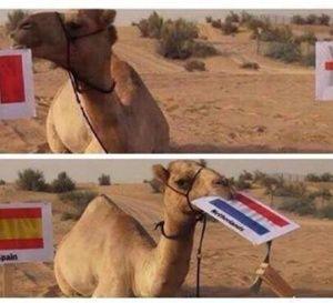 Coupe du monde : Ce chameau pour remplacer Paul le Poulpe