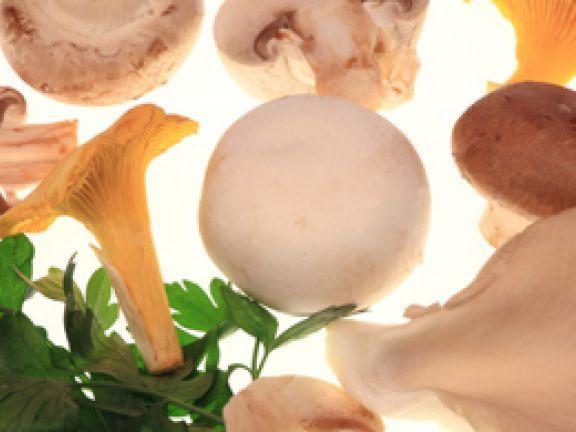 Unter den Speisepilzen gibt es viele verschiedene Sorten, die mit ihren Aromen überzeugen.Erfahren Sie hier mehr.