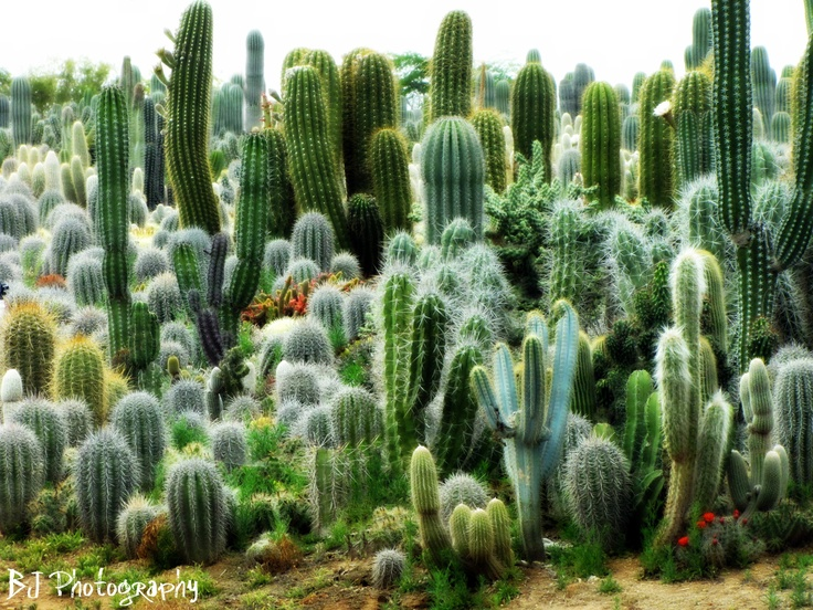 309 best images about Desert Delights on Pinterest