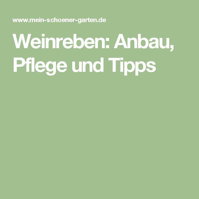 Charmant Weinreben: Anbau, Pflege Und Tipps