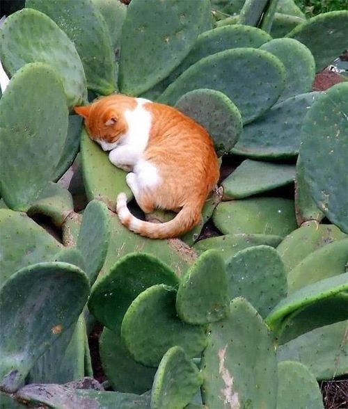 cats in cactus