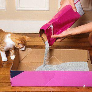 ajoutez du bicarbonate de soude dans la litière du chat pour éviter les mauvaises odeur!
