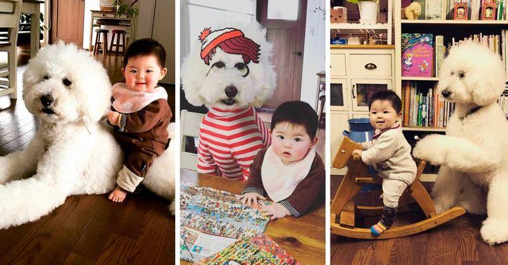 Ella es Mame una niña japonesa de un año y su mejor amigo es Riku, un caniche gigante blanco. Ellos son inseparables y las fotos te harán sentir mucha ternura