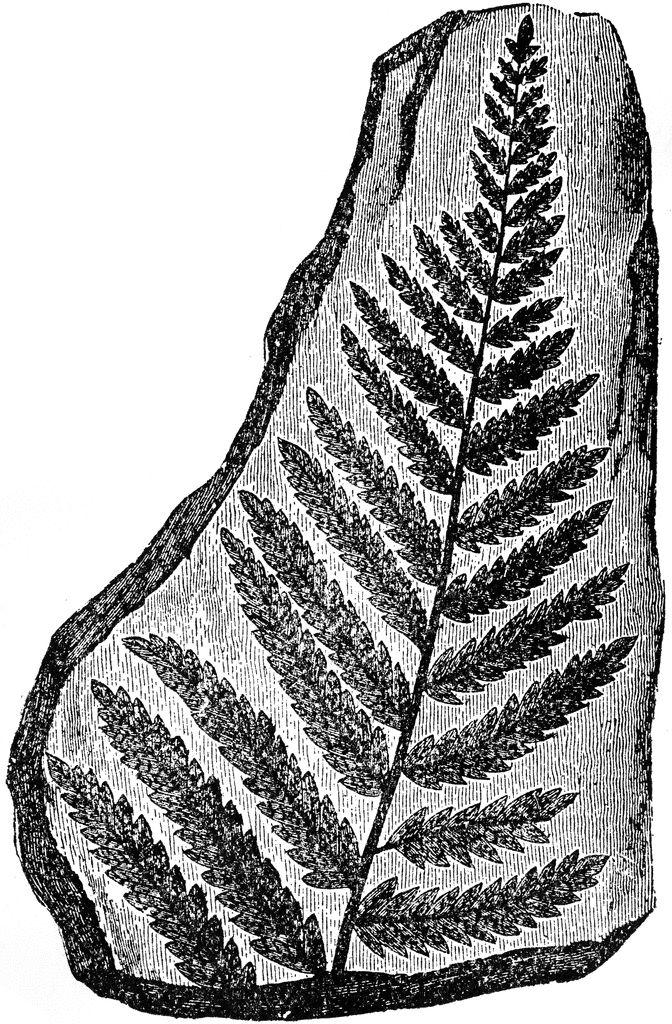 Leaf Indentations Clipart Etc Clip Art Paint Shop Vector Shapes