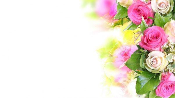 Обои розы, цветы, композиция, нежность, белый фон
