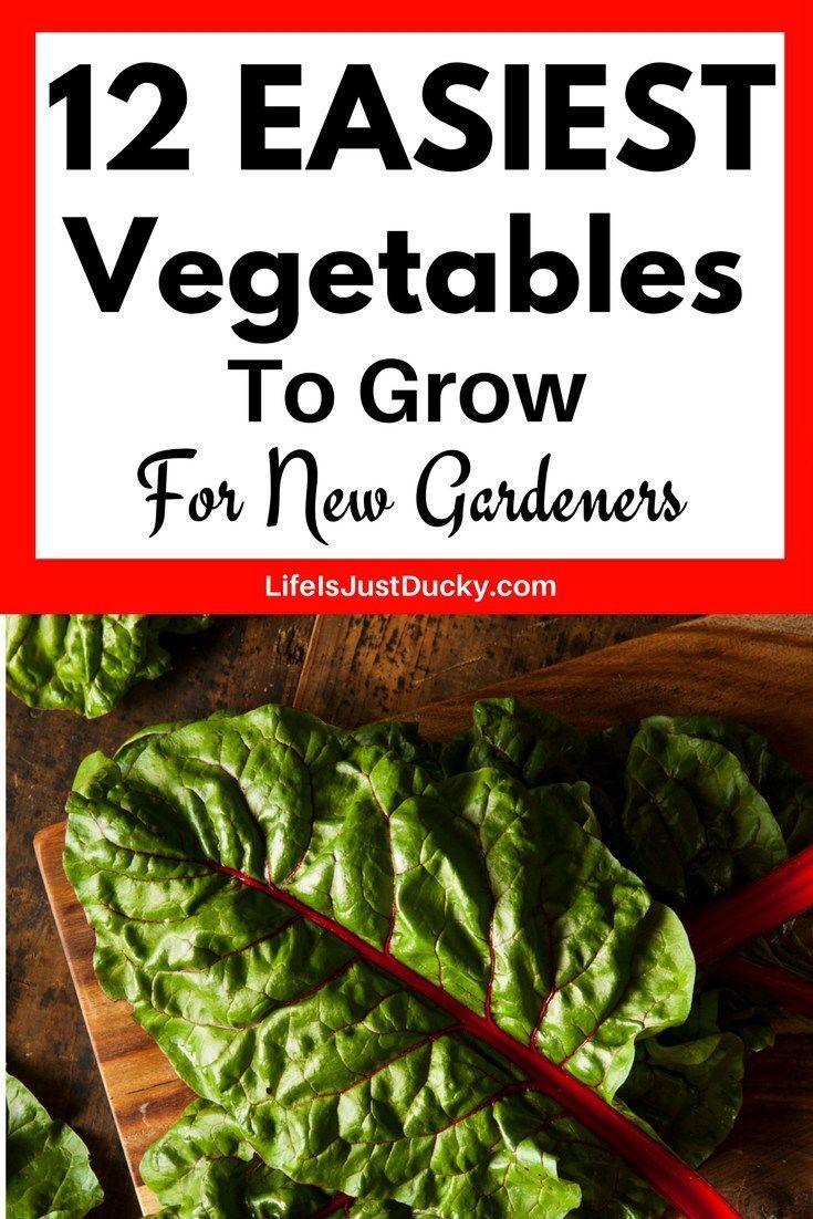 12 Easy Vegetables For Beginning Gardeners – Garden in our yard