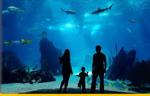 arizona top tourist attractions - Bing Images