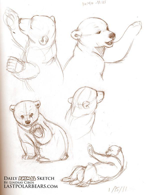 The Last of the Polar Bears - Daily Animal Sketch – Baby Polar Bears