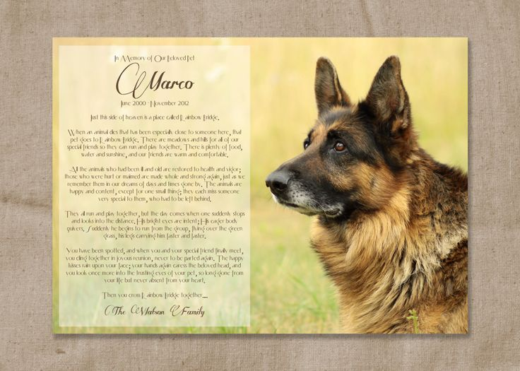 rainbow bridge poem for dogs printable - Google Search ...