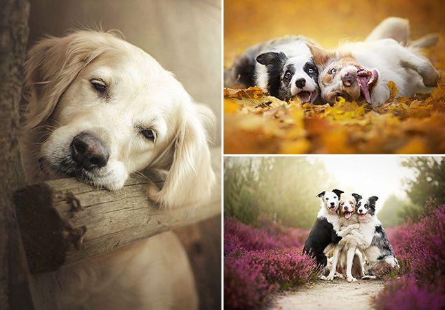 Fotógrafa de 19 anos cria série em que consegue deixar cães ainda mais apaixonantes: http://www.hypeness.com.br/2014/11/fotografa-de-19-anos-cria-serie-em-que-consegue-deixar-caes-ainda-mais-apaixonantes/