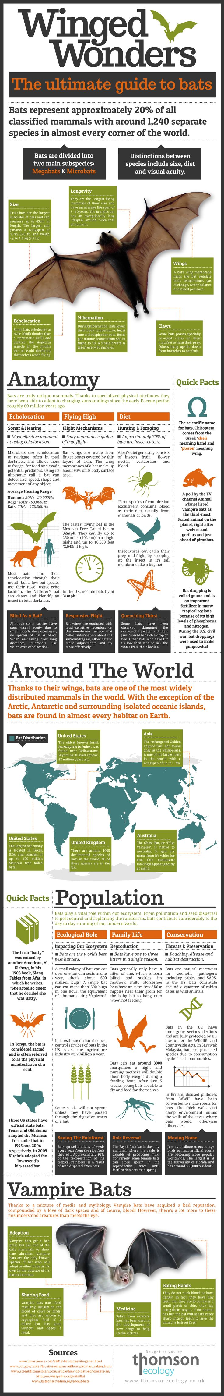 Magazine style infographic all about bats! With digitally drawn illustrations. For thomsonecology.co.uk
