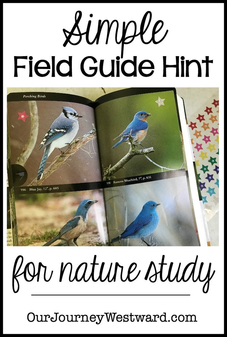 This simple field guide hint is fun (and resourceful) for all ages. Use this idea for any nature study topic.