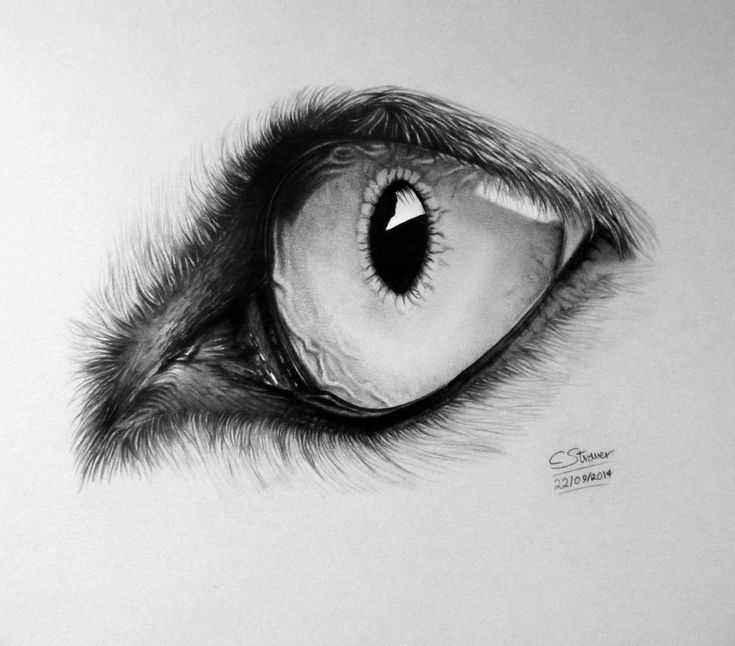 Realistic Wolf Eye Drawing by LethalChris.deviantart.com on @DeviantArt