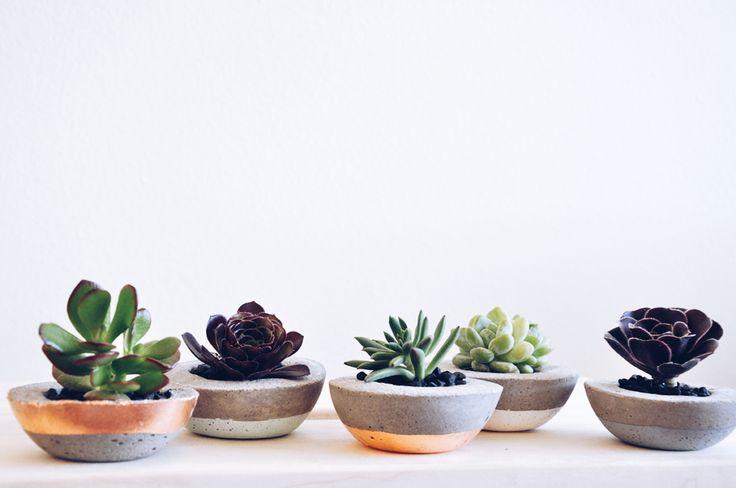 Petite concrete planters with baby succulents