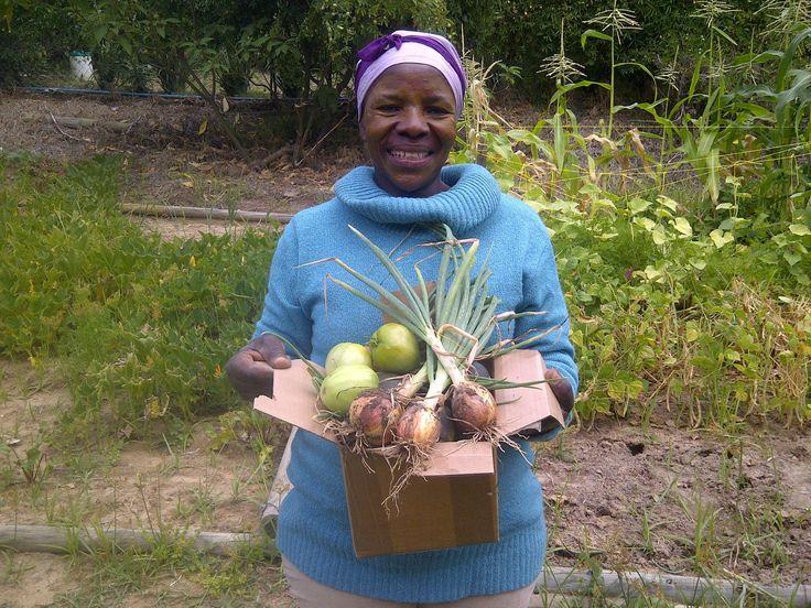 Our own organic veggies on Lanzerac